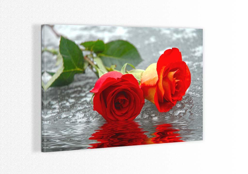 Doi trandafiri pe apa