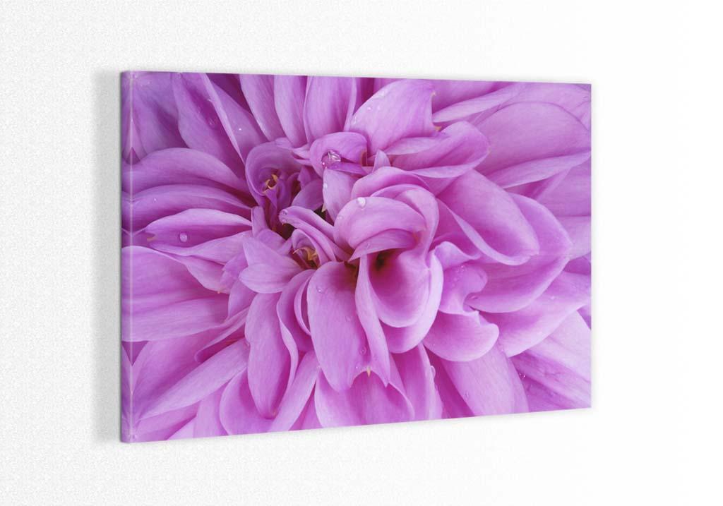 Detalii florale
