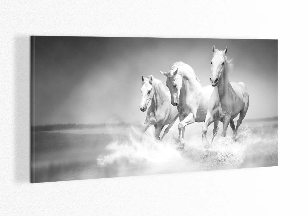 3 cai albi la malul marii