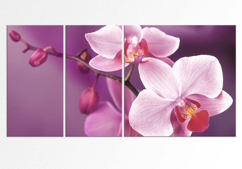 Orhidee impartite in set de 3 tablouri