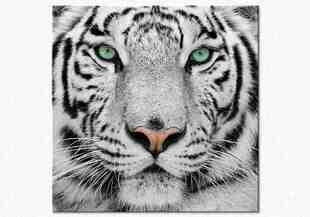 Privire de tigru