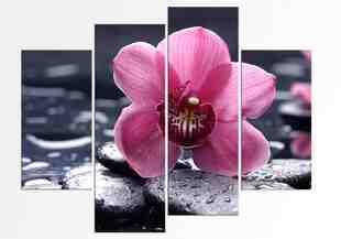 Orhidee gingasa